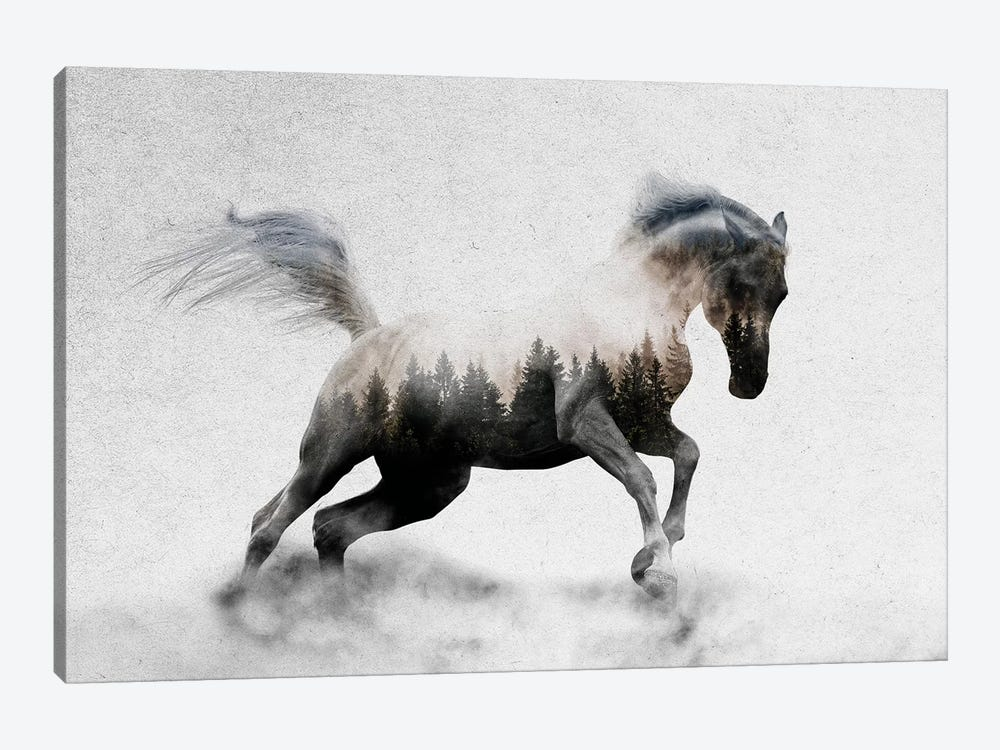 Hest I by Andreas Lie 1-piece Canvas Art Print