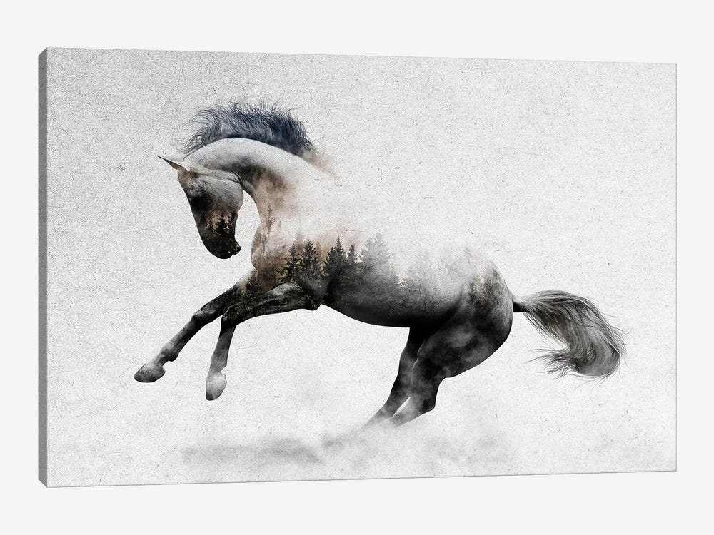 Hest II by Andreas Lie 1-piece Canvas Art