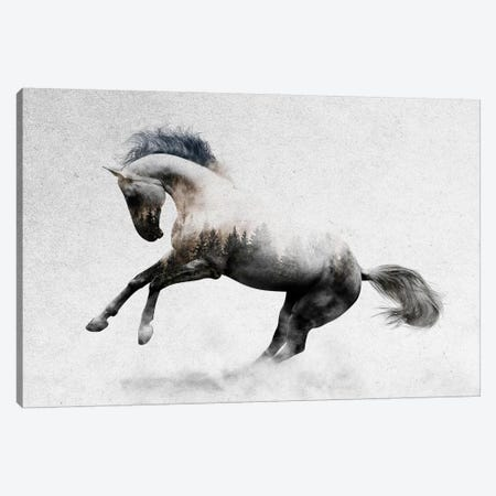 Hest II Canvas Print #ALE185} by Andreas Lie Canvas Art Print