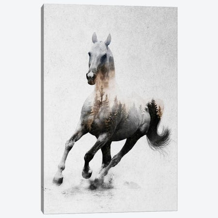 Horse IV Canvas Print #ALE186} by Andreas Lie Canvas Art Print