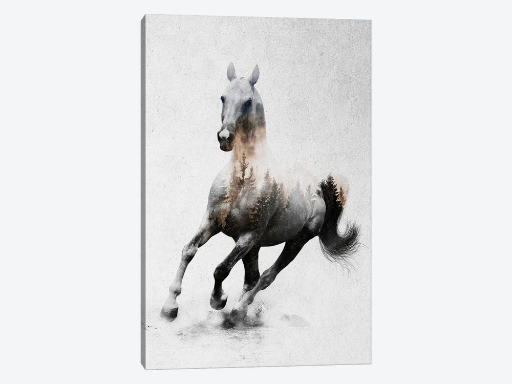 Horse IV by Andreas Lie 1-piece Canvas Art Print