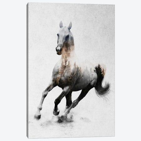 Horse IV Canvas Print #ALE186} by Andreas Lie Canvas Art Print