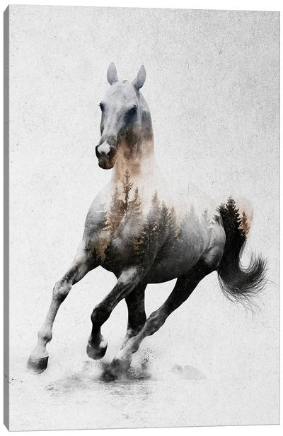 Horse IV Canvas Art Print