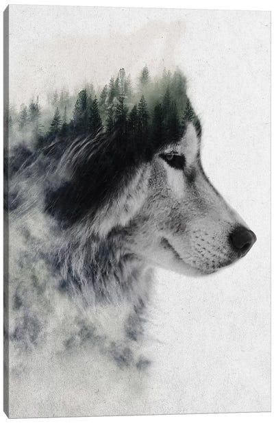 Wolf Stare Canvas Print #ALE189