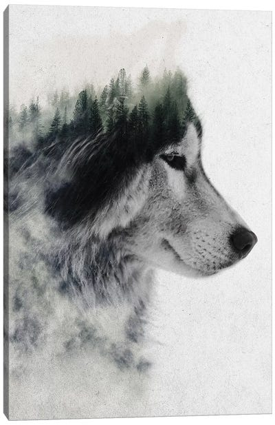 Wolf Stare Canvas Art Print