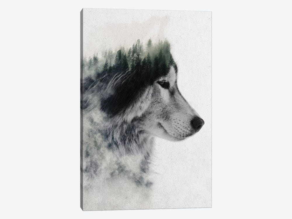 Wolf Stare by Andreas Lie 1-piece Canvas Artwork