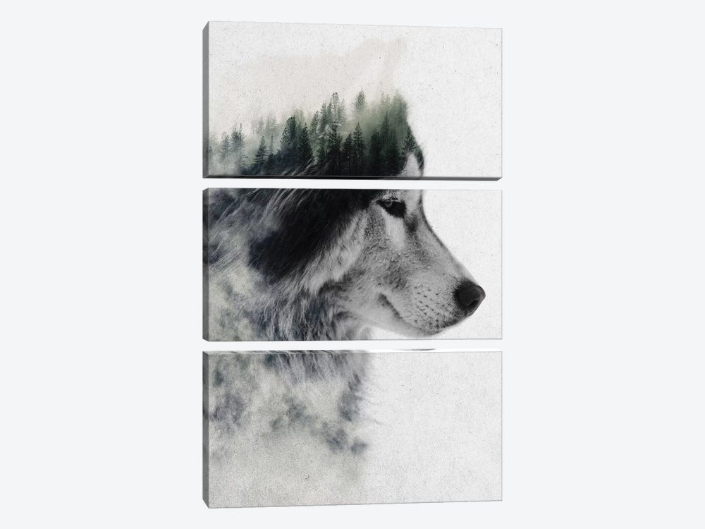 Wolf Stare by Andreas Lie 3-piece Canvas Art