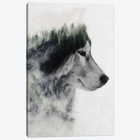 Wolf Stare Canvas Print #ALE189} by Andreas Lie Canvas Wall Art