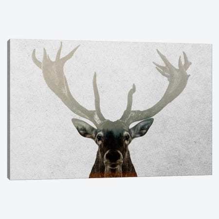 Deer Canvas Print #ALE192} by Andreas Lie Canvas Print