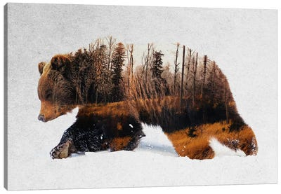 Travelling Bear Canvas Art Print