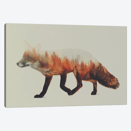 Fox I Canvas Print #ALE1} by Andreas Lie Art Print