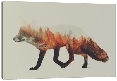 Fox I Canvas Art Print