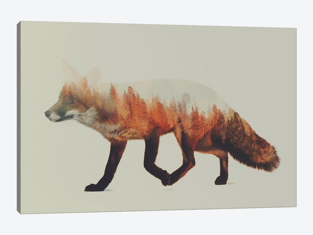 Fox I by Andreas Lie 1-piece Canvas Print