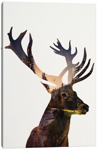 Deer In Forest Canvas Art Print