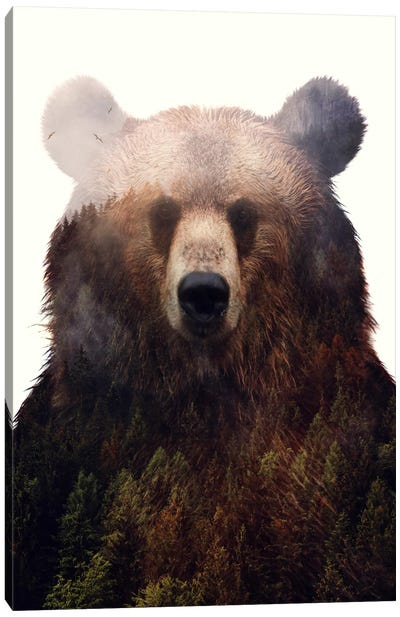 King Of The Forest Canvas Art Print