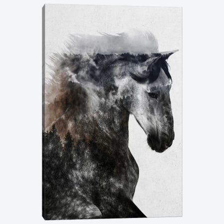 Proud Stallion Canvas Print #ALE223} by Andreas Lie Canvas Print