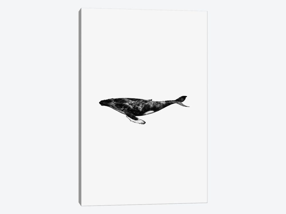 Whale by Andreas Lie 1-piece Canvas Art