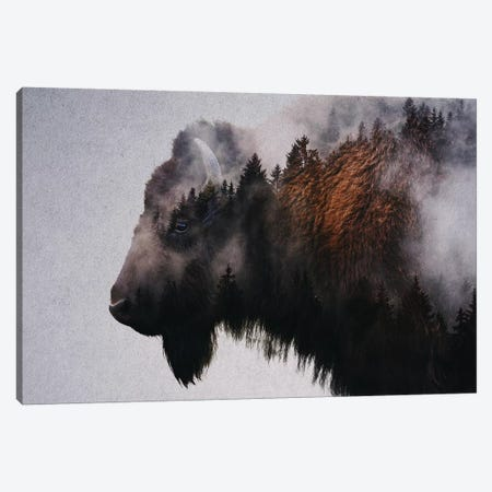 Bison Canvas Print #ALE229} by Andreas Lie Art Print