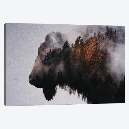 Bison Canvas Print #ALE229} by Andreas Lie Art Print