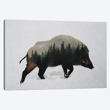 Wild Boar Canvas Print #ALE242} by Andreas Lie Canvas Art Print