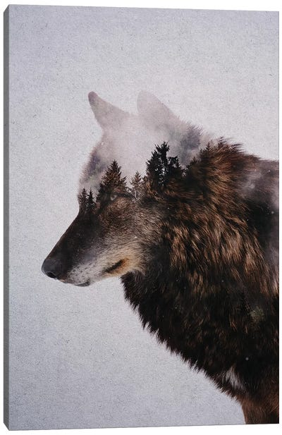 Wolf IX Canvas Art Print