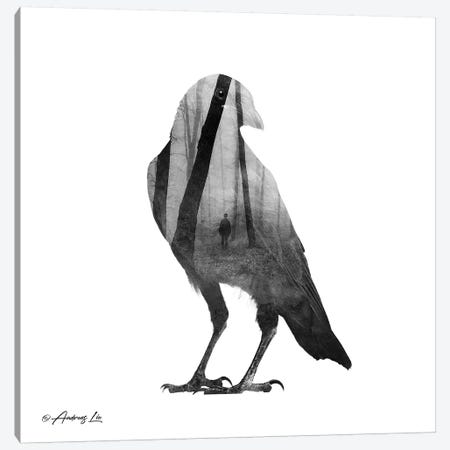 Black & White Bird 3-Piece Canvas #ALE255} by Andreas Lie Canvas Art Print