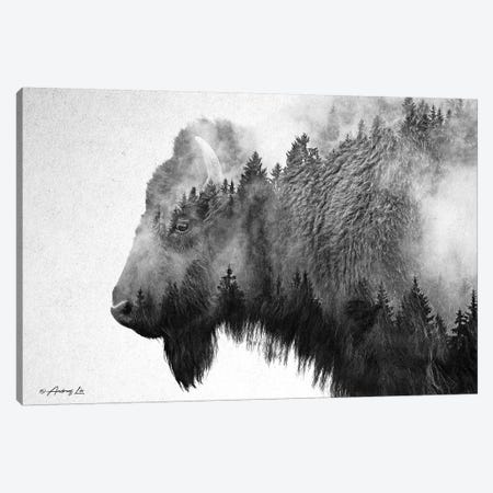 Black & White Bison Canvas Print #ALE256} by Andreas Lie Art Print