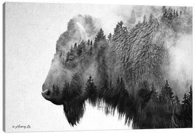 Black & White Bison Canvas Art Print