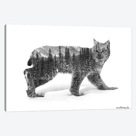 Black & White Bobcat Canvas Print #ALE257} by Andreas Lie Canvas Art Print