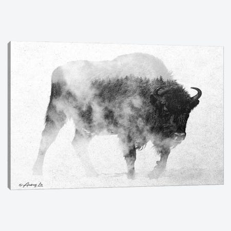 Black & White Buffalo II Canvas Print #ALE259} by Andreas Lie Canvas Art