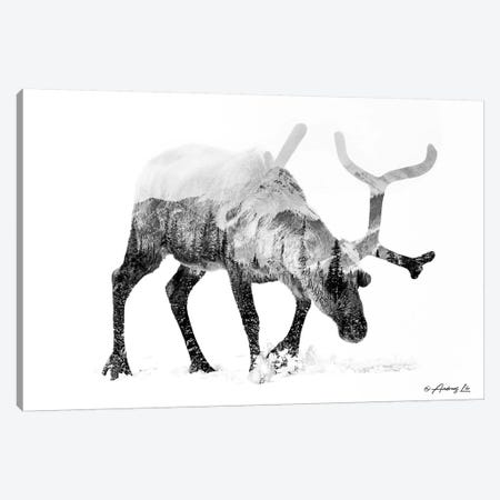 Black & White Reindeer Canvas Print #ALE270} by Andreas Lie Canvas Wall Art