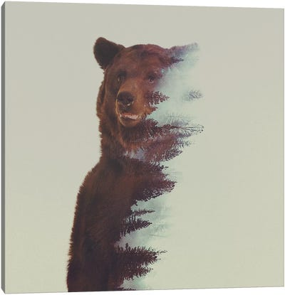 Bear in the Woods Canvas Print #ALE31