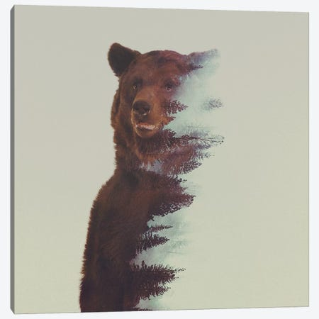 Bear in the Woods Canvas Print #ALE31} by Andreas Lie Art Print