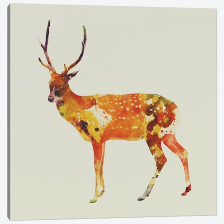 Deer II Canvas Print #ALE32} by Andreas Lie Art Print