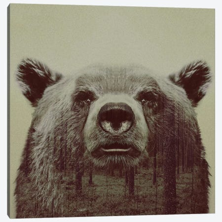 Bear II Canvas Print #ALE33} by Andreas Lie Art Print