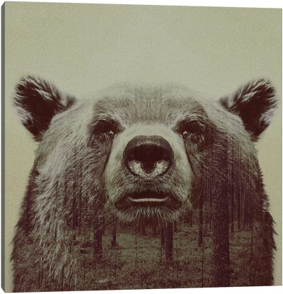 Bear II Canvas Art Print