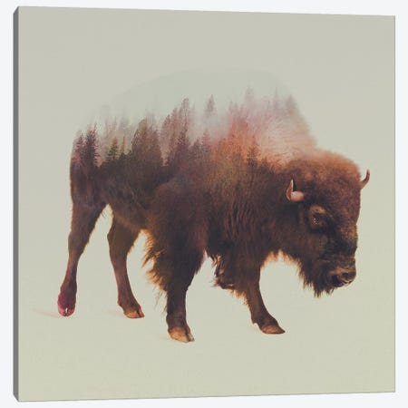 Bison I Canvas Print #ALE37} by Andreas Lie Canvas Art