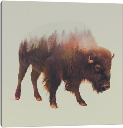 Bison I Canvas Print #ALE37