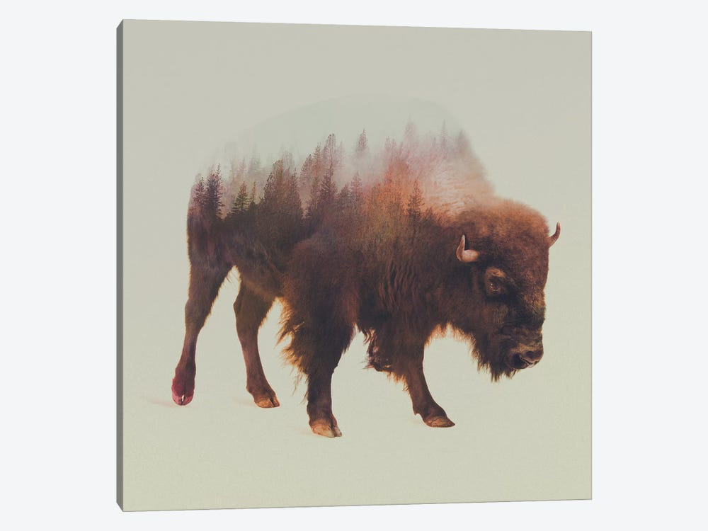Bison I by Andreas Lie 1-piece Canvas Art Print