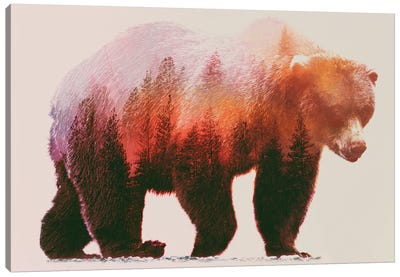 Brown Bear Canvas Print #ALE39