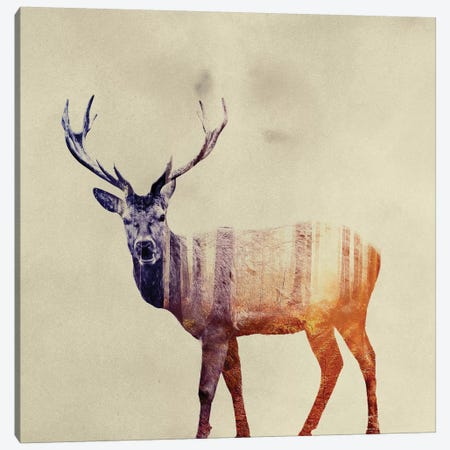 Deer I Canvas Print #ALE44} by Andreas Lie Canvas Art Print