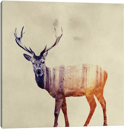Deer I Canvas Art Print