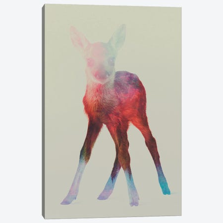 Fawn I Canvas Print #ALE45} by Andreas Lie Canvas Print