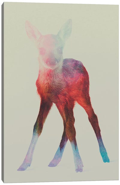 Fawn I Canvas Art Print