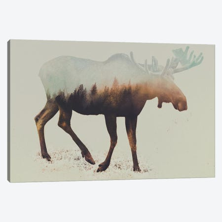 Elk I Canvas Print #ALE52} by Andreas Lie Art Print