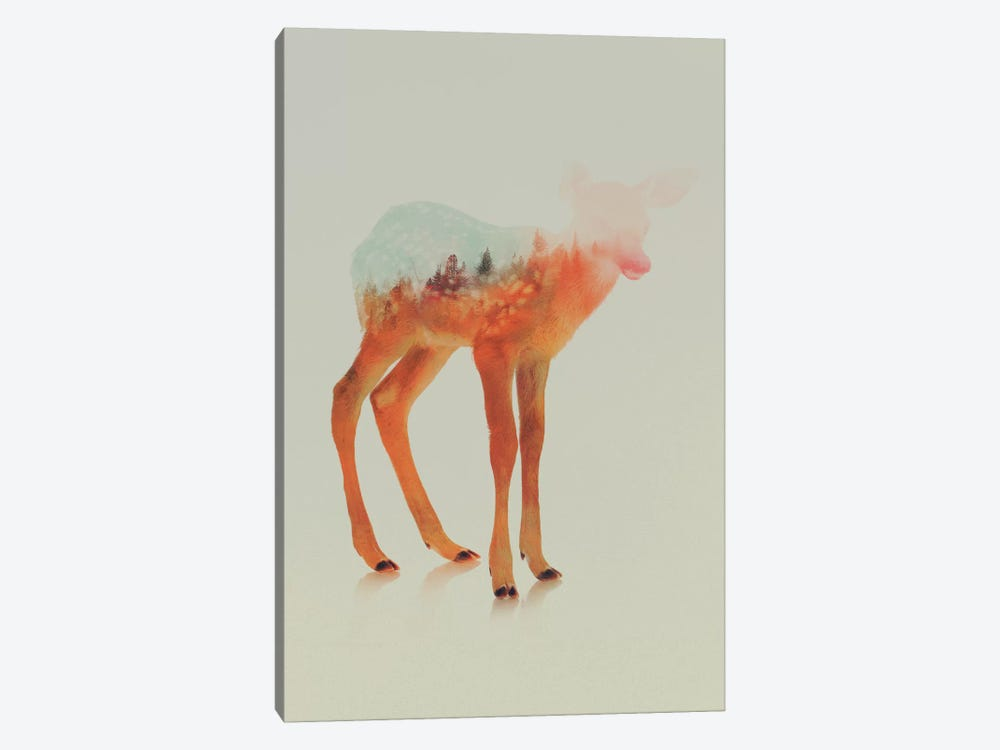 Fawn II by Andreas Lie 1-piece Canvas Print