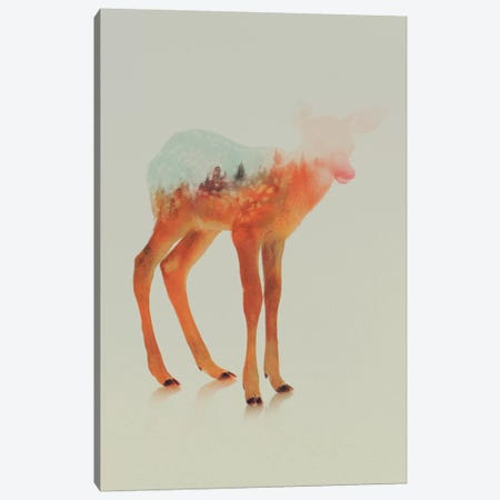 Fawn II Canvas Print #ALE60} by Andreas Lie Canvas Art
