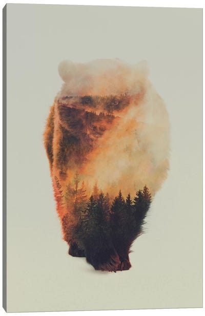 Approaching Bear Canvas Art Print