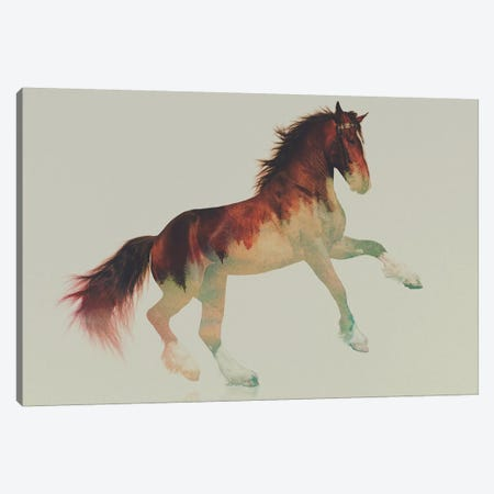 Horse II Canvas Print #ALE71} by Andreas Lie Art Print