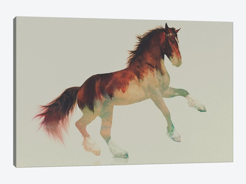 Horse II by Andreas Lie 1-piece Canvas Art Print